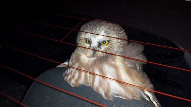 owl-inside-the-car-hilarious-excuses-for-being-late