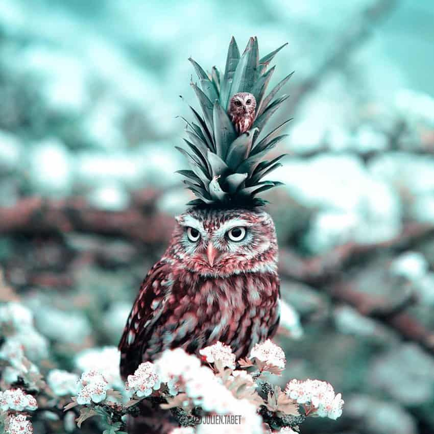 owl-pineapple-marvelous-animal-photos