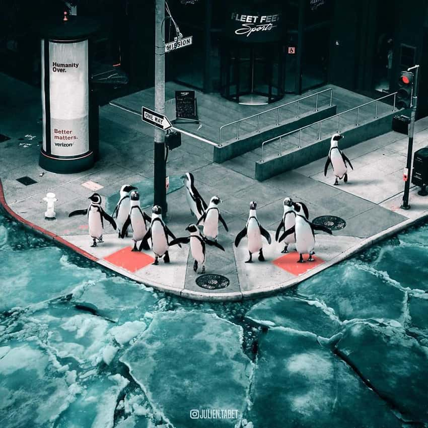 penguins-in-the-city-marvelous-animal-photos
