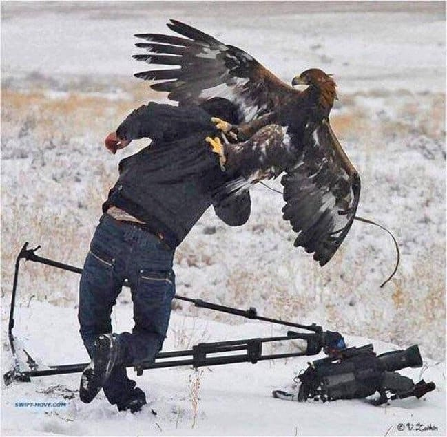 photographer-attacked-by-an-eagle-photos-captured-before-disaster-struck