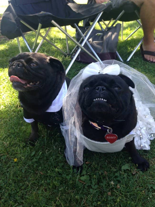 rascal-and-rosey-wedding