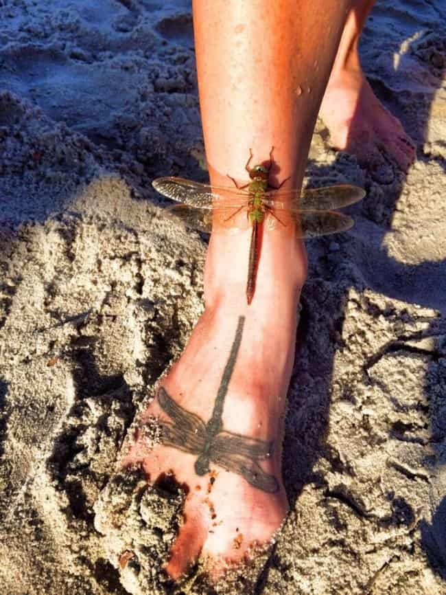 real-dragonfly-lands-next-to-a-tattoo-extraordinary-things