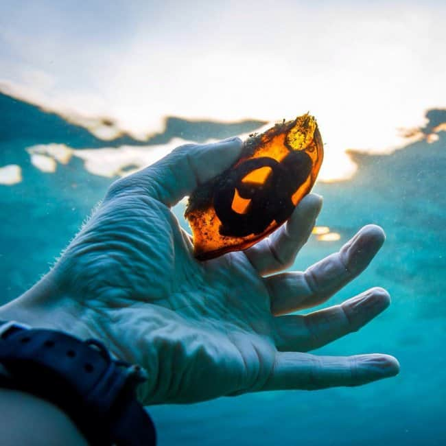 shark-egg-in-the-light-real-things-that-actually-exist