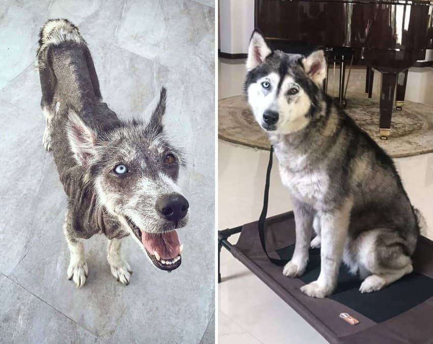 skinny-dirty-dog-transforms-into-a-handsome-dog-rescued-dogs