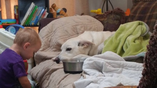 son-comforts-dog-afraid-of-the-thunder-proud-parents
