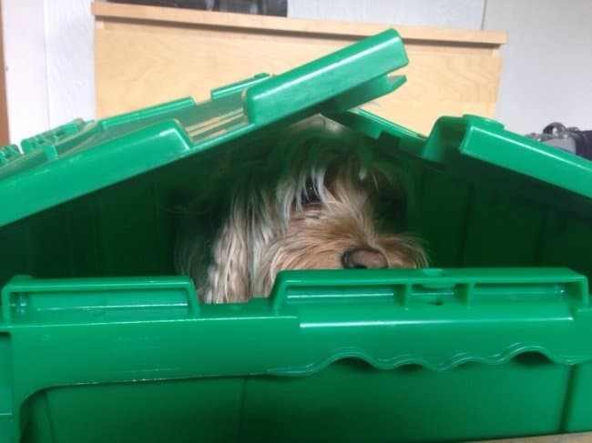 son-packed-his-dog-first-when-family-moves-out-proud-parents