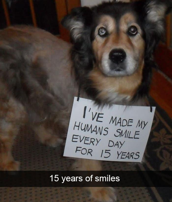 spent-15-years-making-humans-smile-adorable-dog-snapchats