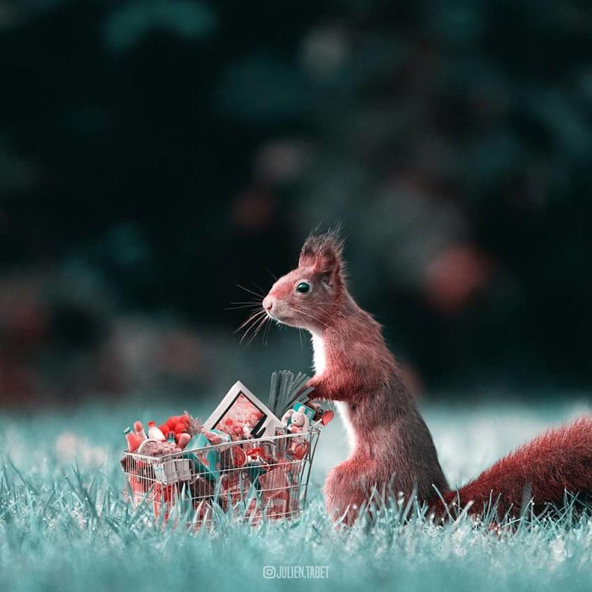 squirrel-shopping-marvelous-animal-photos