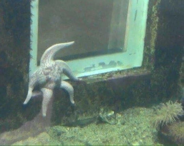 starfish-sitting-like-a-man-confusing-photos