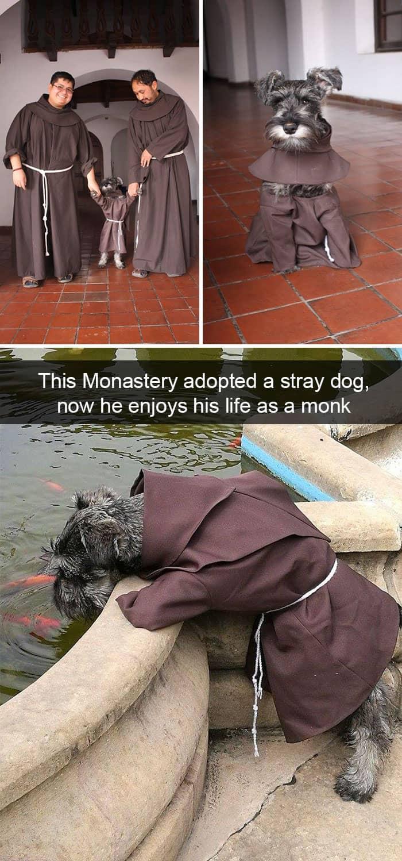 stray-dog-turns-into-a-monk-adorable-dog-snapchats