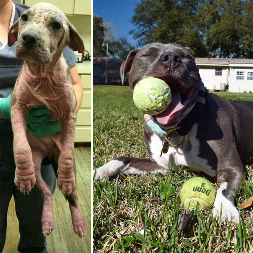 two-years-after-being-left-at-the-park-rescued-dogs