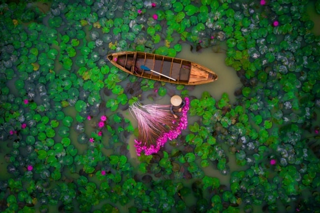 woman-collecting-water-lilies-in-mekong-delta-vietnam