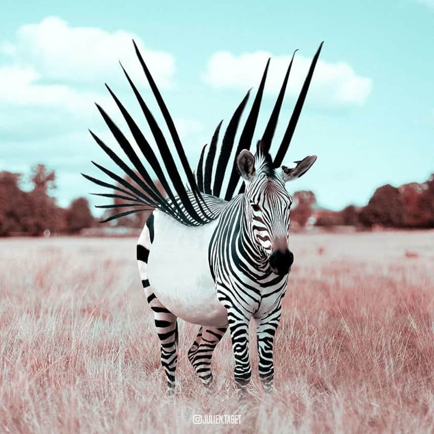 zebra-stripes-wings-marvelous-animal-photos