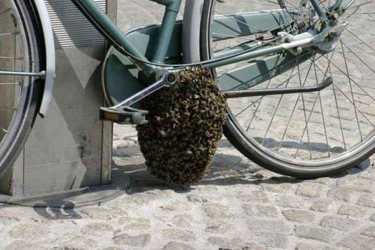 beehive bike hilariously bad situations