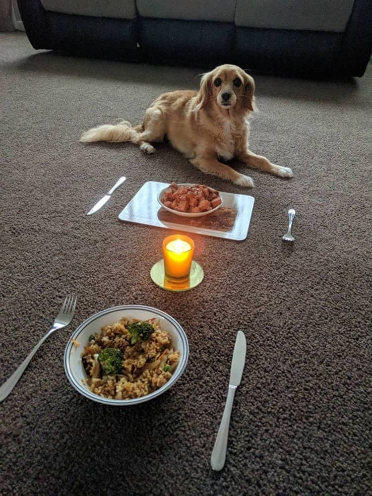candlelit-dinner-with-a-dog-visually-pleasing-photos