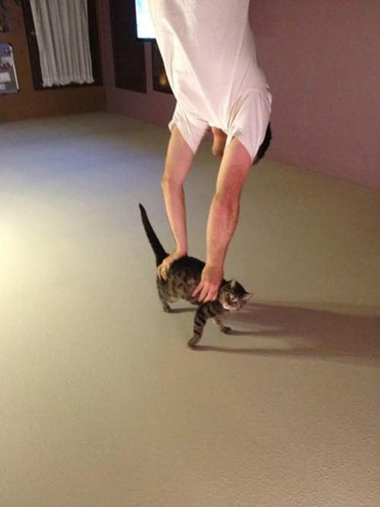 cat-carrying-a-man-confusing-pics
