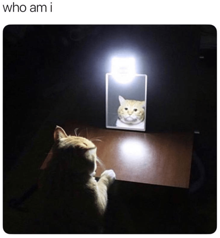 cat-existential-crisis-bizarre-things