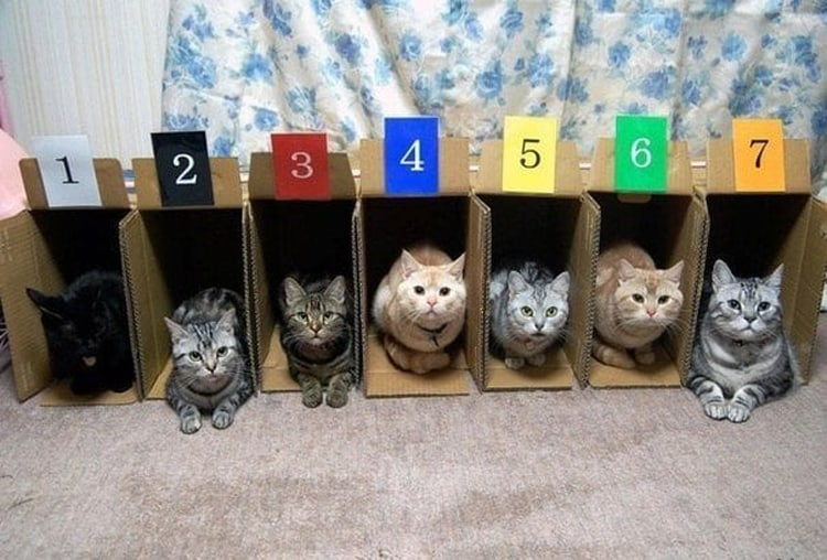 cat-racing-silly-things-bored-people-do
