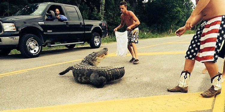 catching-a-crocodile-hilariously-bad-situations