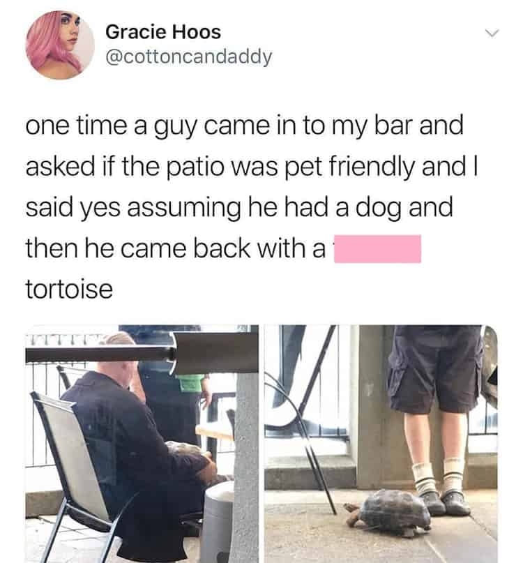 customer-brings-tortoise-pet-whimsical-people
