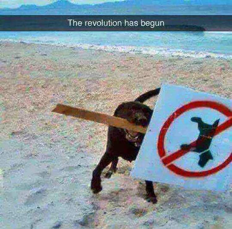 dog-removes-sign-people-breaking-rules