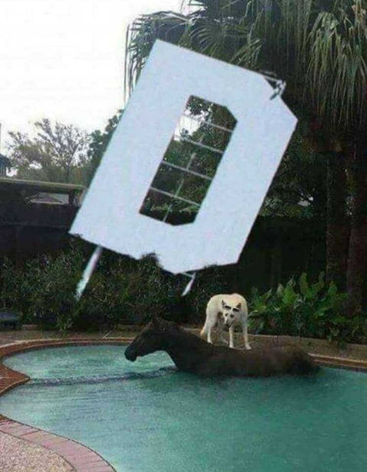 dog-riding-on-a-horse-at-the-pool-nonsensical-photos