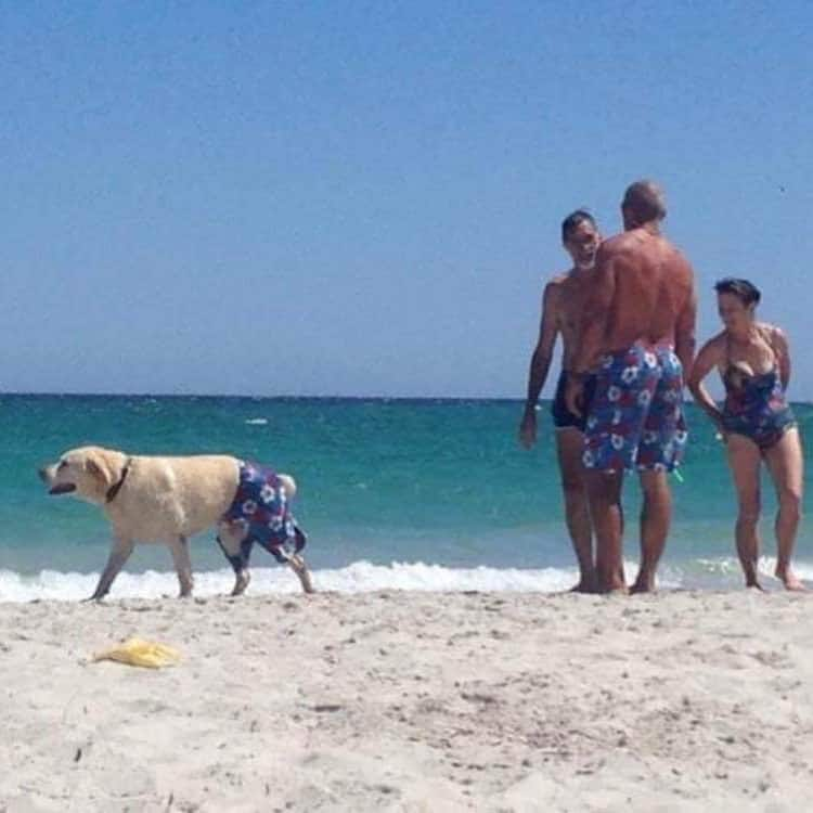 dog-with-matching-shorts-nonsensical-photos