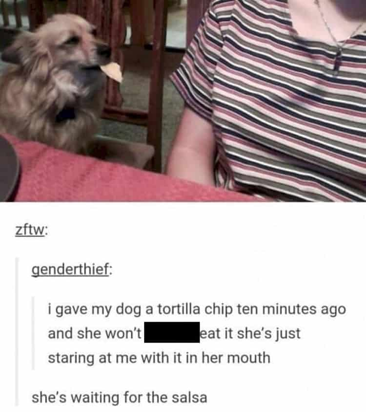 dog-wont-eat-chip-without-salsa-brutally-honest-people