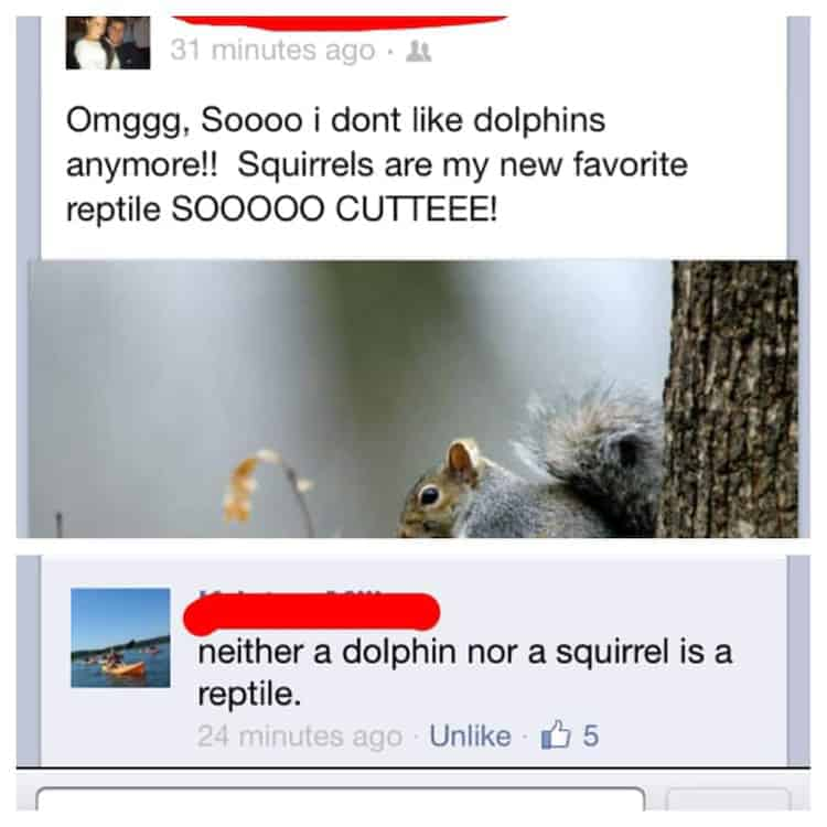 dolphins-and-squirrels-are-reptiles-hysterically-funny-photos