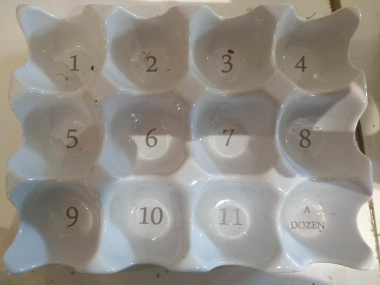 dozen-12-eggs-baffling-pics