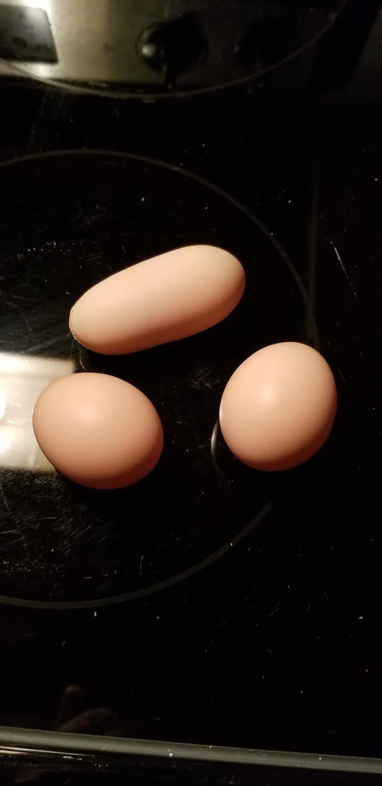 elongated-egg-hilariously-unnecessary-things