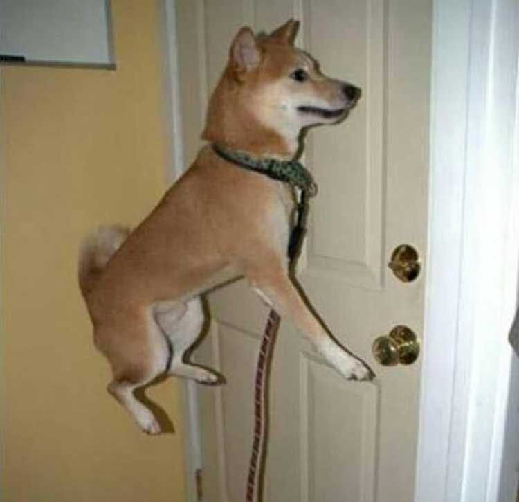 flying-dog-crazy-mysteries