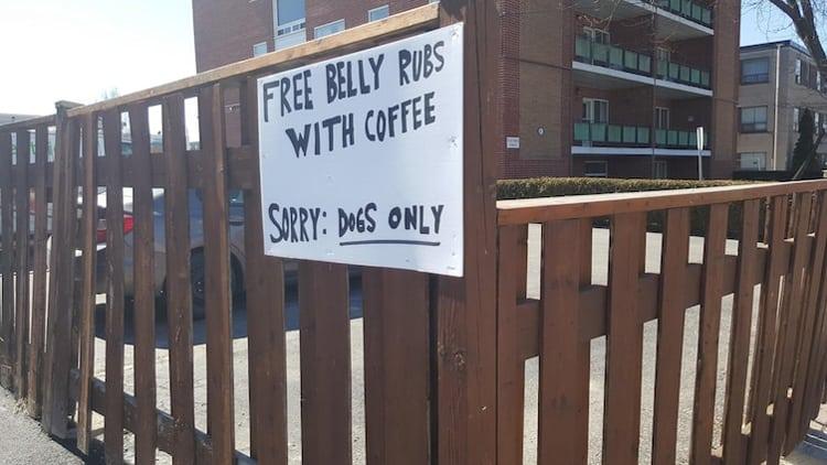 free-belly-rubs-unforeseen-hilarity