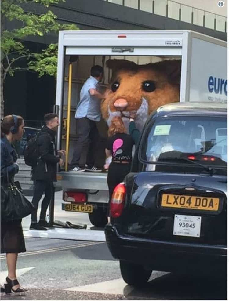 giant-guinea-pig-mascot-in-the-truck-hilariously-weird-things