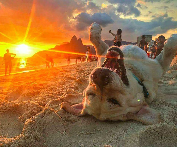 happy-dog-enjoying-the-sunset-coolest-things
