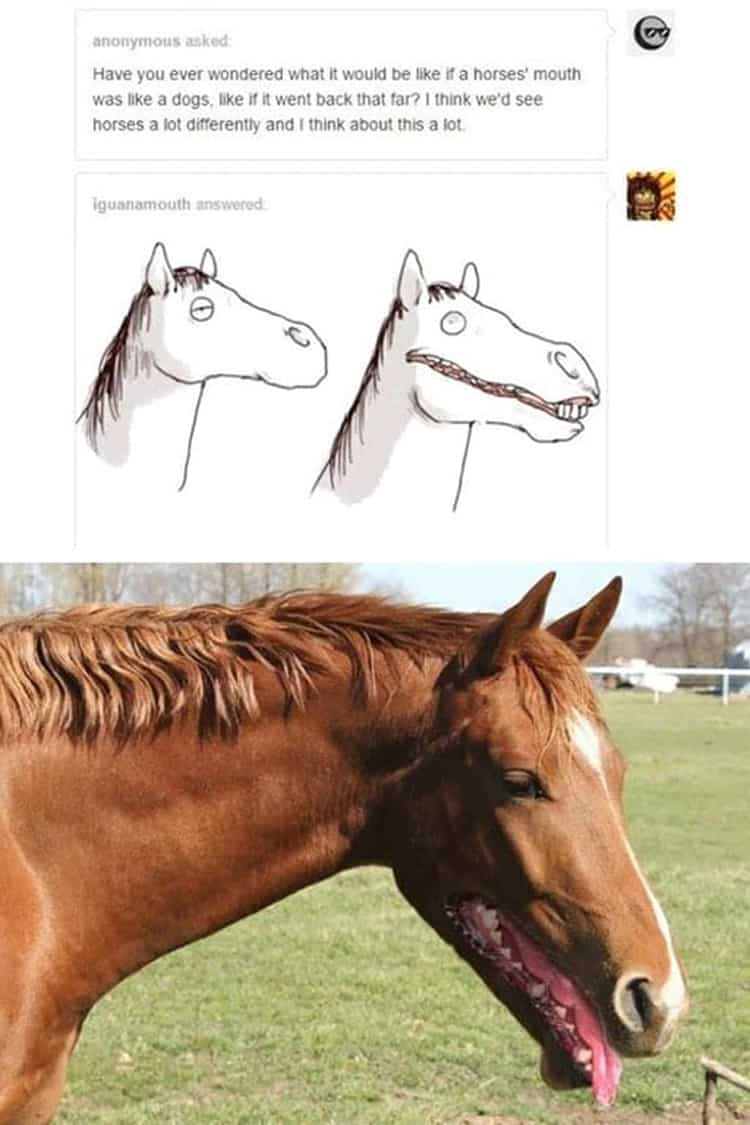 horse-with-dog-mouth-hilarious-side-of-internet