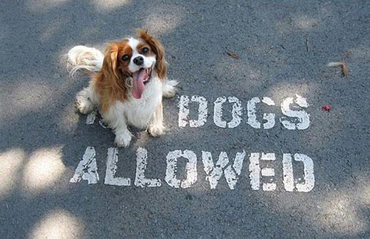no-dogs-allowed-people-breaking-rules