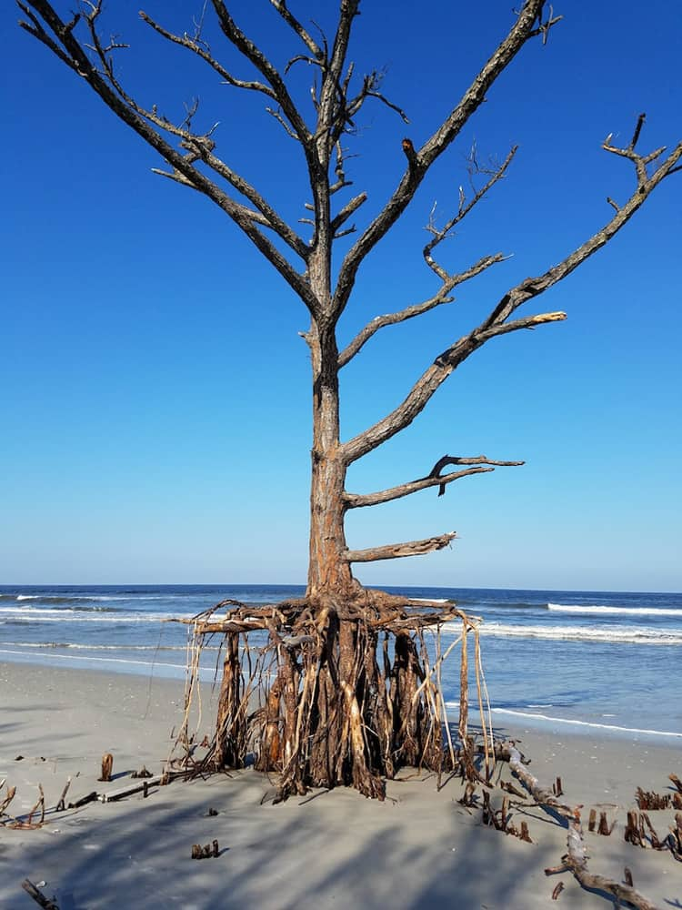 ocean-washed-away-tree-trunk-root-strange-things