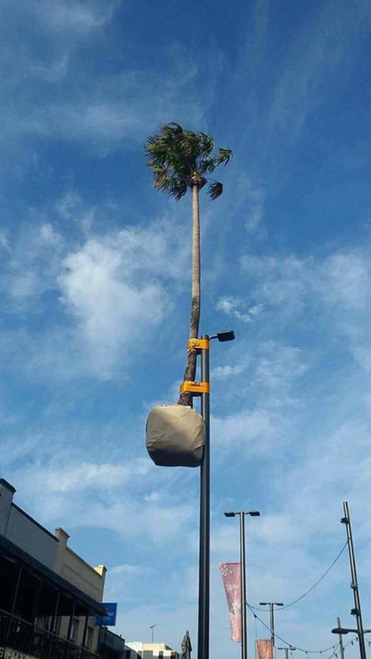 palm-tree-street-lamp-crazy-mysteries