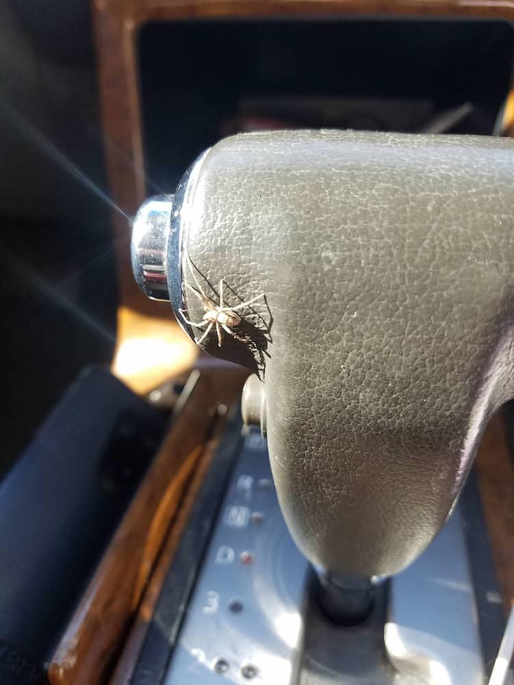 spider-in-the-car-gear-stick-irritating-photos