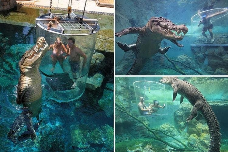 swimming-with-crocodile-creepy-pictures