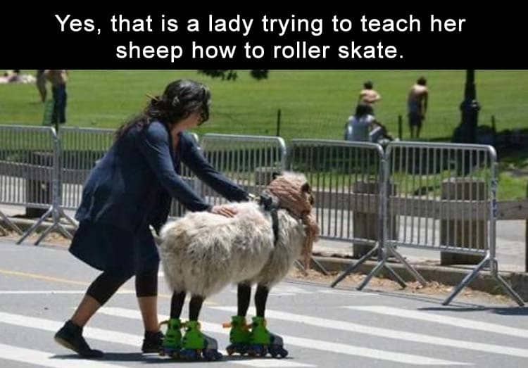 teaching-a-sheep-to-rollerskate-hilariously-unnecessary-things
