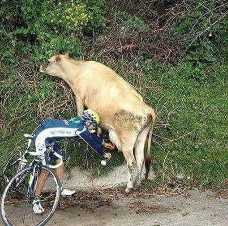 thirsty-cyclist-milking-a-cow-april-fools