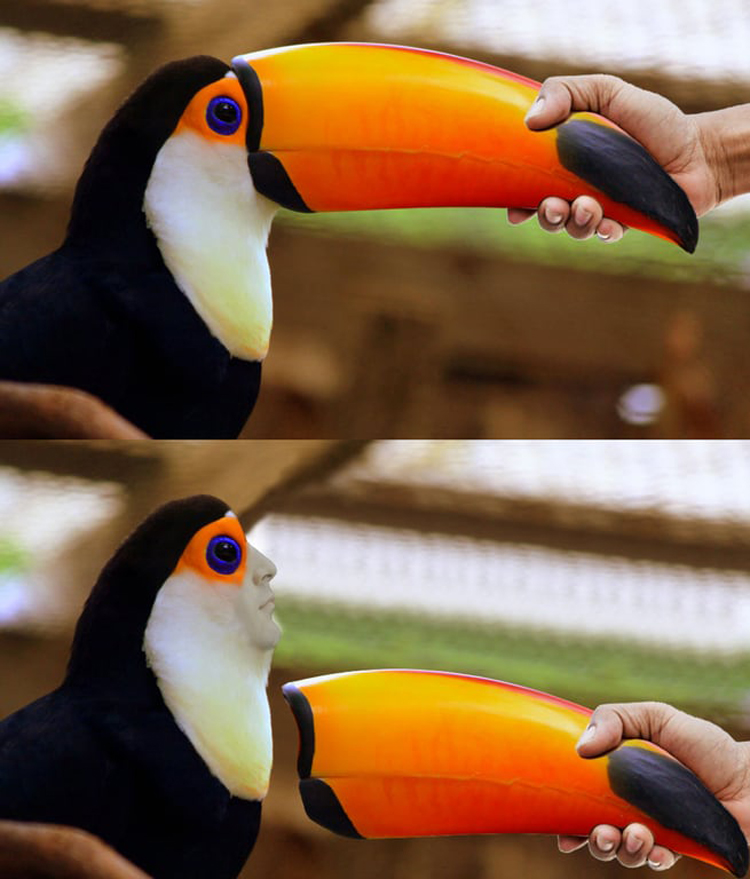 toucan man hilarious side of internet