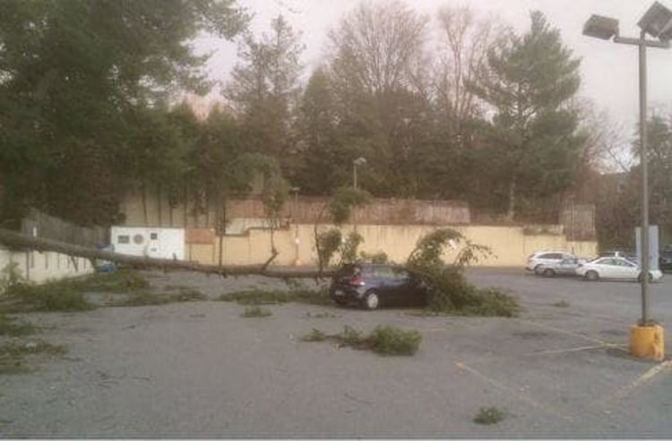 tree falling on a car annoying pics