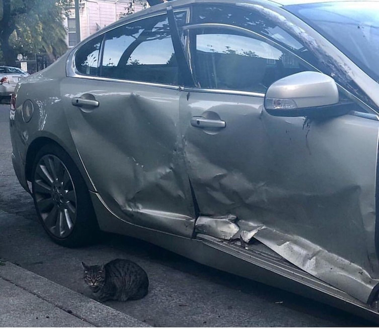cat-smashed-car-funny-proofs-earth-goofball