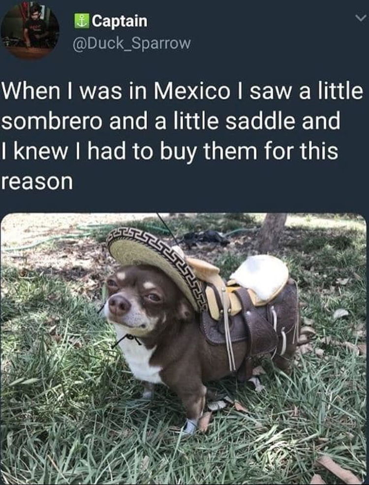 sombrero-saddle-for-dogs-impressive-jokesters