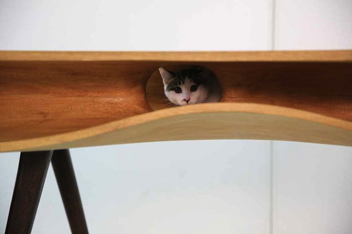 cat hiding inside table