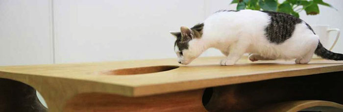 cat looking into table hole