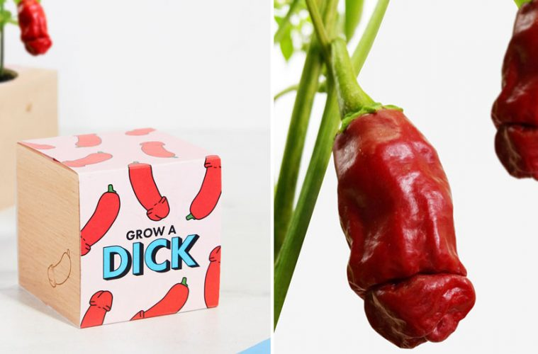 grow a dick chillies Phallic